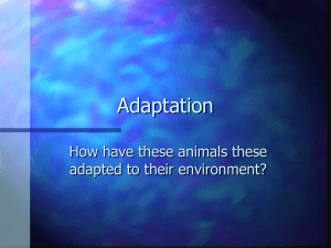 Adaptation How have these animals these adapted to their environment?