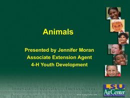Animals Presented by Jennifer Moran Associate Extension Agent 4-H Youth Development