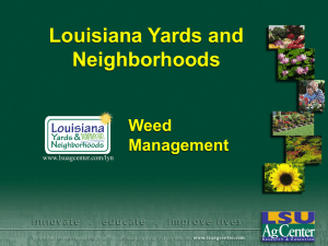 Louisiana Yards and Neighborhoods Weed Management