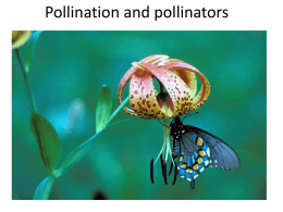 Pollination and pollinators