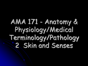 AMA 171 - Anatomy & Physiology/Medical Terminology/Pathology 2  Skin and Senses