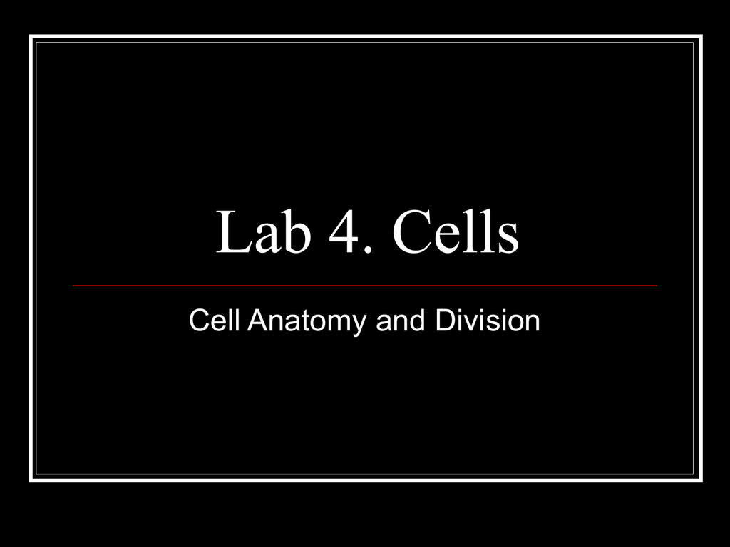 Lab 4. Cells Cell Anatomy and Division