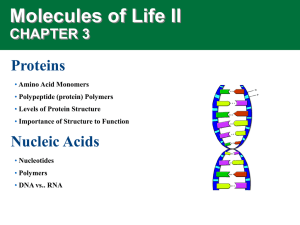 Molecules of Life II Proteins CHAPTER 3