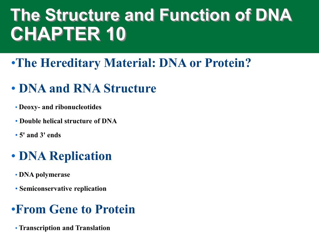 CHAPTER 10 The Structure and Function of DNA •
