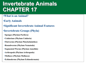 Invertebrate Animals CHAPTER 17 • What is an Animal?