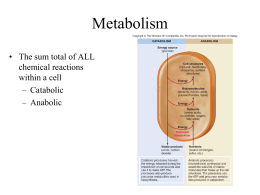 Metabolism • The sum total of ALL chemical reactions within a cell