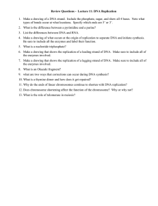 Review Questions -  Lecture 11: DNA Replication