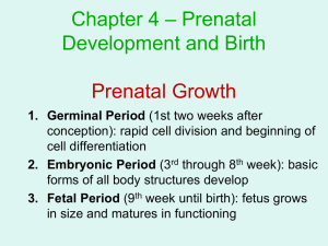 – Prenatal Chapter 4 Development and Birth Prenatal Growth