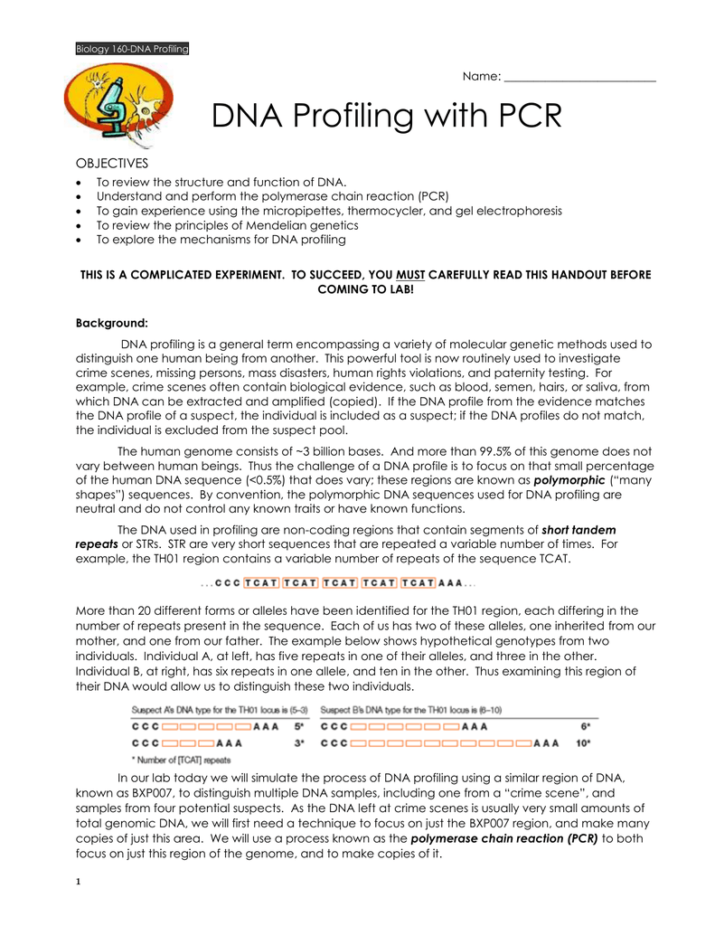 DNA Profiling with PCR OBJECTIVES
