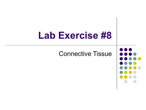 Lab Exercise #8 Connective Tissue