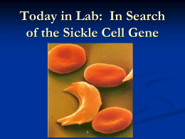 Today in Lab:  In Search of the Sickle Cell Gene
