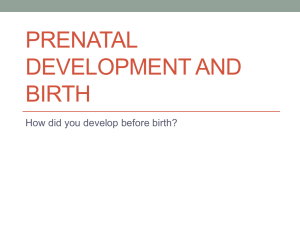 PRENATAL DEVELOPMENT AND BIRTH How did you develop before birth?
