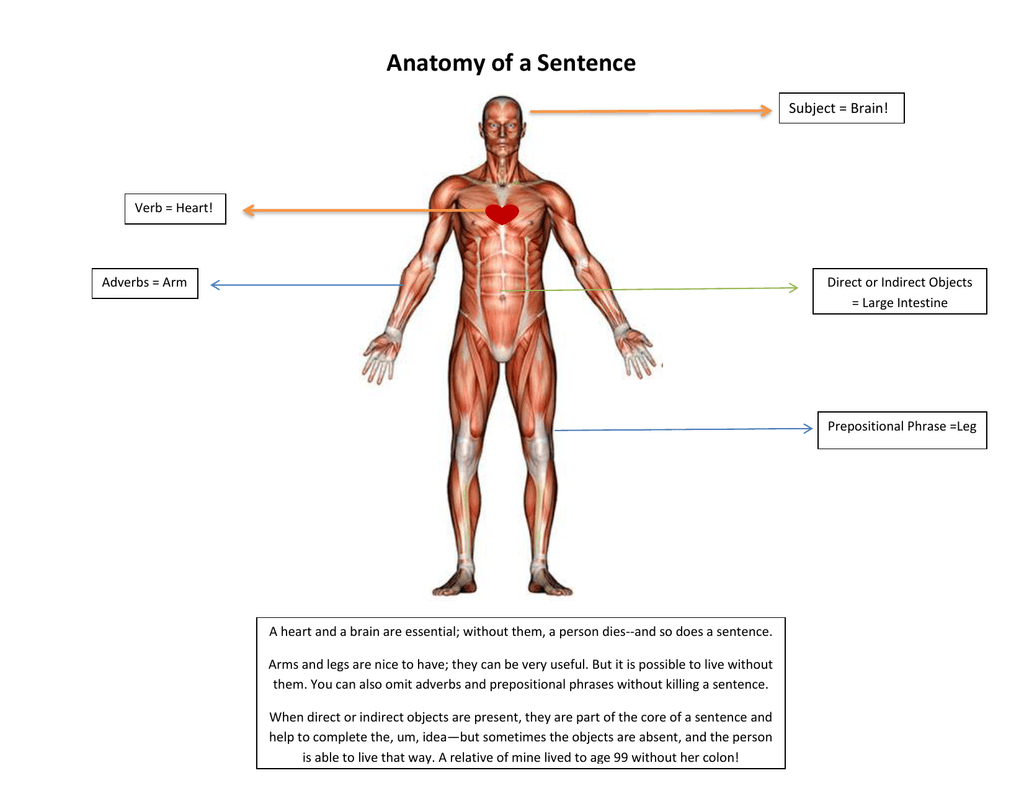 Anatomy - what is the subject of study of science 61