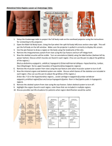Abdominal Pelvic Regions Lesson w/ Anatomage Table: