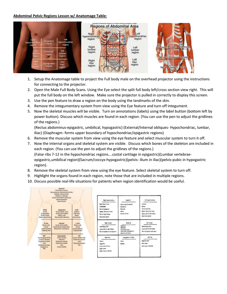 Abdominal Pelvic Regions Lesson W Anatomage Table