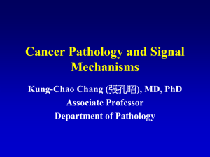 Cancer Pathology and Signal Mechanisms Kung-Chao Chang ( Associate Professor