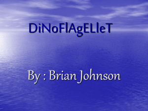DiNoFlAgELleT By : Brian Johnson