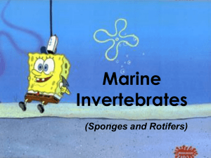 Marine Invertebrates (Sponges and Rotifers)