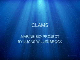 CLAMS MARINE BIO PROJECT BY LUCAS WILLENBROCK