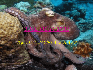 THE OCTOPUS BY: LISA MARIA KNAPP