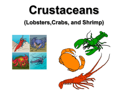 Crustaceans (Lobsters,Crabs, and Shrimp)