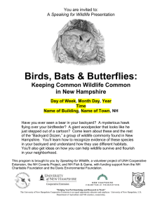 Birds, Bats & Butterflies: Keeping Common Wildlife Common in New Hampshire