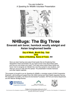 NHBugs: The Big Three Emerald ash borer, hemlock woolly adelgid and