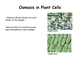 Osmosis in Plant Cells