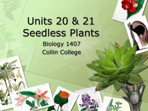 Units 20 & 21 Seedless Plants Biology 1407 Collin College