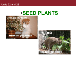 • SEED PLANTS Units 22 and 23