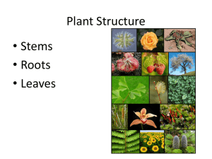 Plant Structure • Stems • Roots • Leaves