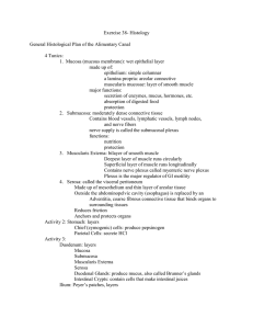 Exercise 38- Histology  General Histological Plan of the Alimentary Canal 4 Tunics: