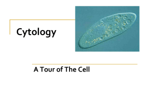 Cytology A Tour of The Cell