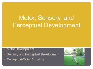 Motor, Sensory, and Perceptual Development Motor Development Sensory and Perceptual Development
