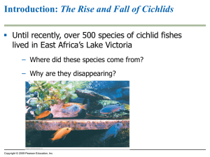 The Rise and Fall of Cichlids 