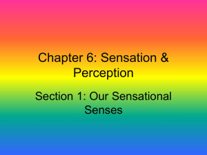Chapter 6: Sensation & Perception Section 1: Our Sensational Senses