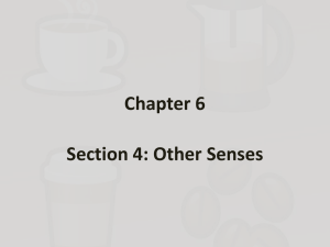 Chapter 6 Section 4: Other Senses