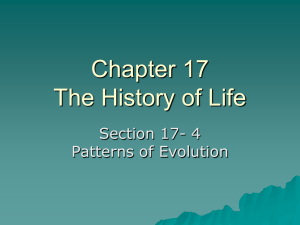 Chapter 17 The History of Life Section 17- 4 Patterns of Evolution