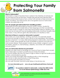 Protecting Your Family Salmonella
