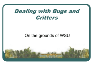 Dealing with Bugs and Critters On the grounds of WSU