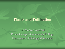 Plants and Pollination Dr. Moore-Crawford Prince George's Community College Department of Biological Sciences