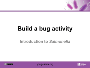 Build a bug activity Salmonella