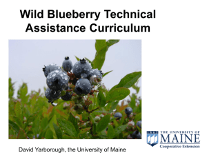 Wild Blueberry Technical Assistance Curriculum David Yarborough, the University of Maine