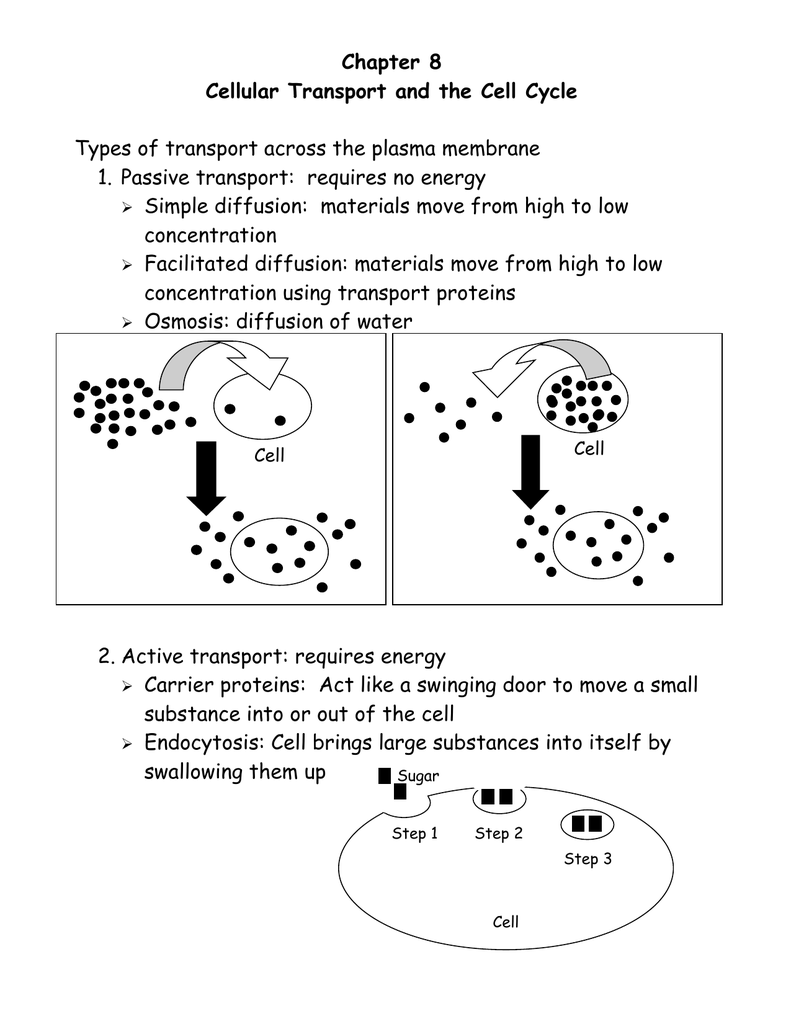 worksheet Cellular Transport And The Cell Cycle Worksheet 016053996 1 f4ae61240f0f2146977dd1e4d7483621 png