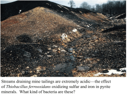 Streams draining mine tailings are extremely acidic—the effect Thiobacillus ferrooxidans