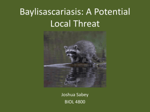 Baylisascariasis: A Potential Local Threat Joshua Sabey BIOL 4800