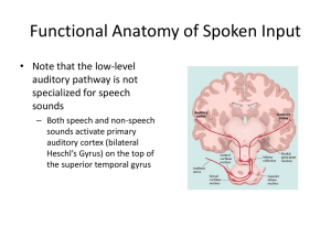 Functional Anatomy of Spoken Input • Note that the low-level