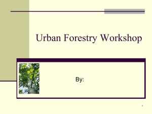 Urban Forestry Workshop By: 1