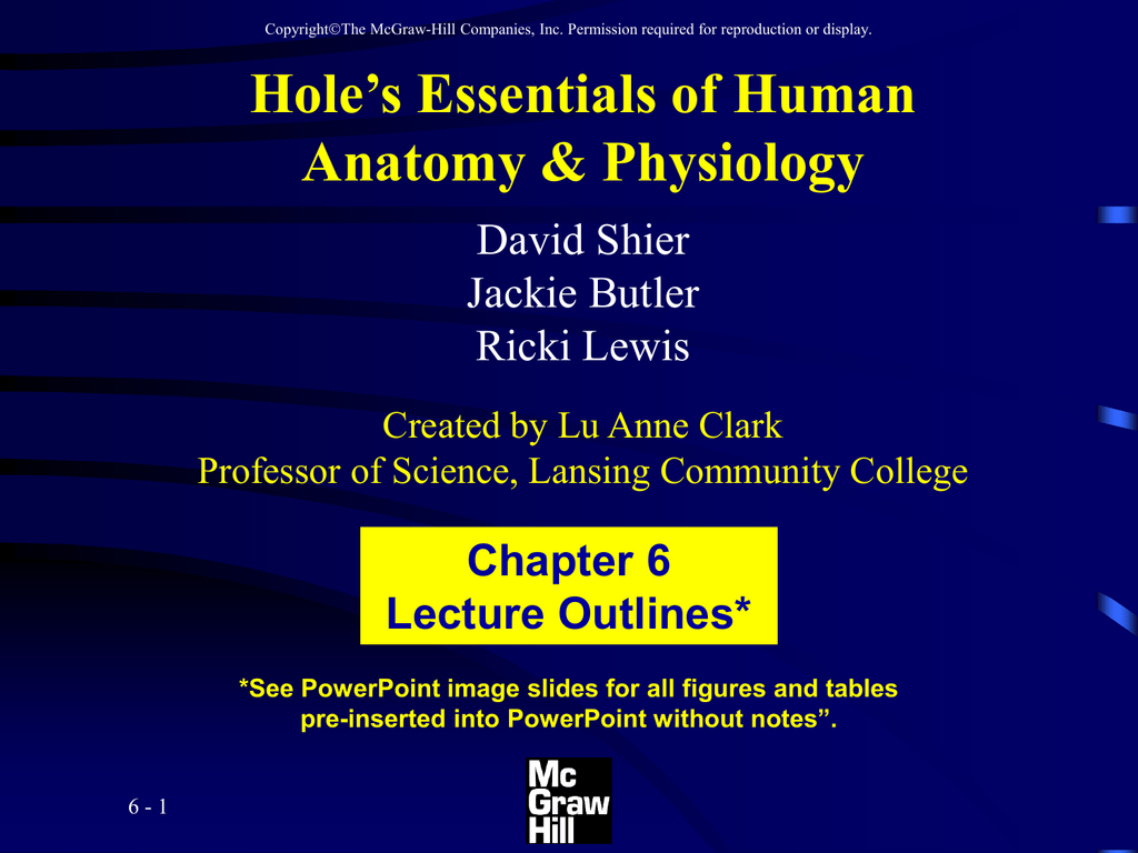 Hole\'s Essentials of Human Anatomy & Physiology Chapter 6 Lecture ...