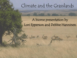 Climate and the Grasslands A biome presentation by